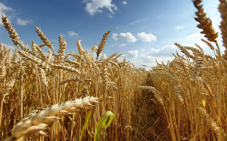 Экономические удары по аграрию: Все пути защиты привели к поражению